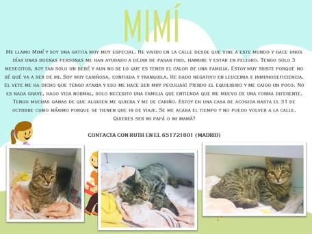 Mim%c3%8d (002)