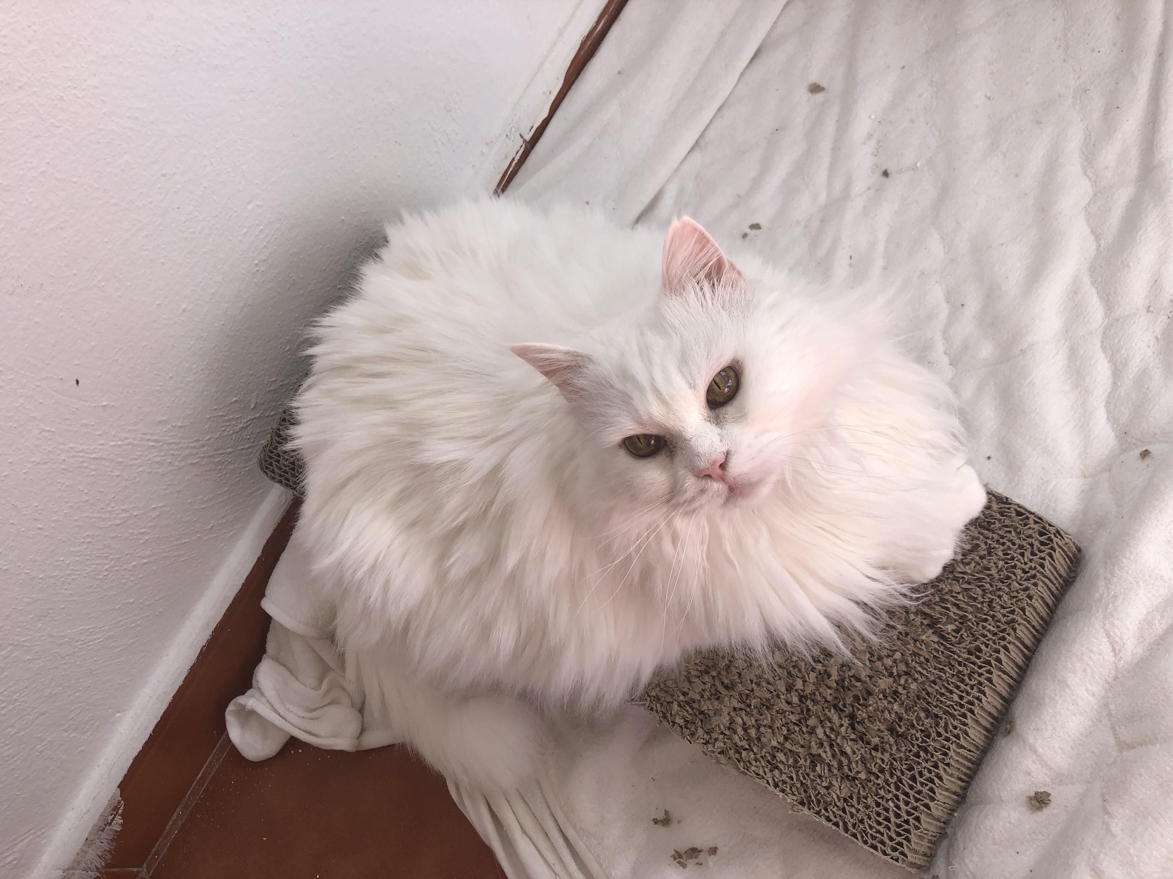 Adopta A Un Gato En Valencia